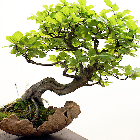 pure natural pumice grow media for bonsai enthusiasts